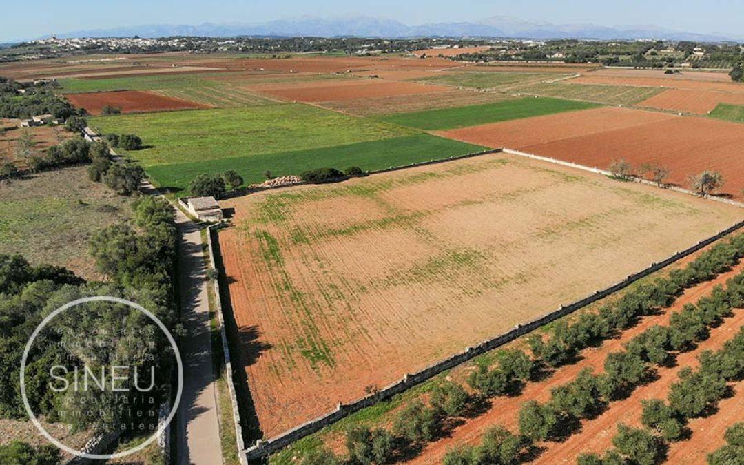 Ariany – Baugrundstück von 14.200 m2 mit Wasser und Lizenz